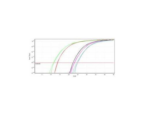 RT-PCR 2